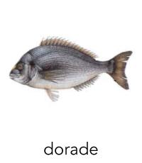 dorade1
