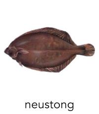 neustong1