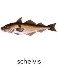 schelvis1