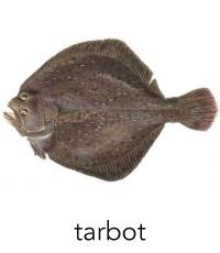 tarbot1
