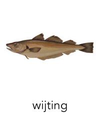 wijting1