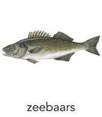 zeebaars1
