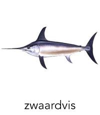 zwaardvis1