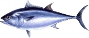 tonijn2
